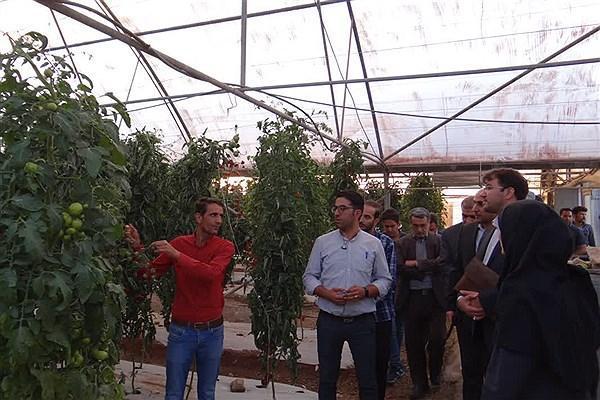 دانشگاه آزاد اصفهان به فناوری فراوری بذر هیبرید دست یافت
