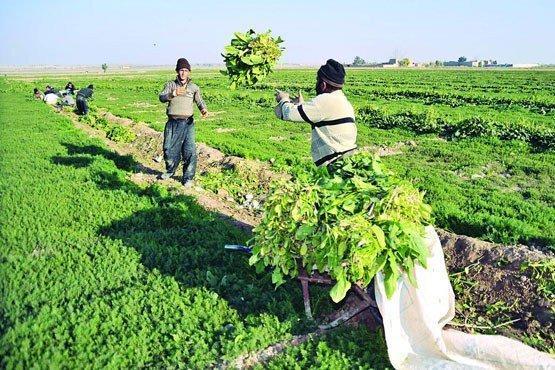 تحقق مدیریت هوشمند کشاورزی باعث کاهش خسارات کشاورزی شده است