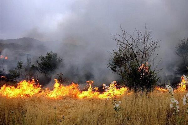 وقوع 4 مورد حریق مراتع و پوشش گیاهی طی یک روز در همدان