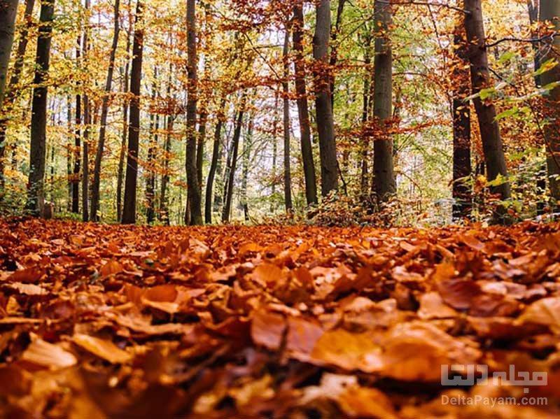 افسردگی فصلی در پاییز، نکاتی که باید بدانیم