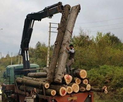 منابع طبیعی به طورگسترده وارد مرتع موقوفه شده و اقدام به قطع و جمع آوری درختان کرده اند