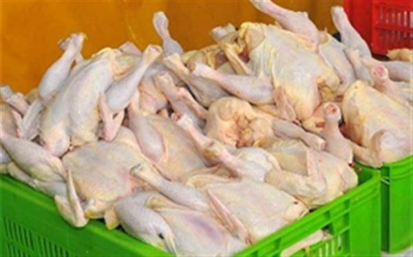 امکان فراوری 2 برابری گوشت مرغ با احیای مرغ آرین