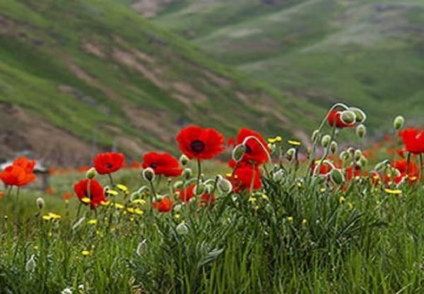 400 گونه نادر از گل های وحشی جهان در ایران، خواص گل های وحشی را بشناسید