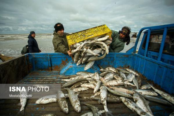 مشخص مرزبندی های موقت برای صید در خوریات ماهشهر
