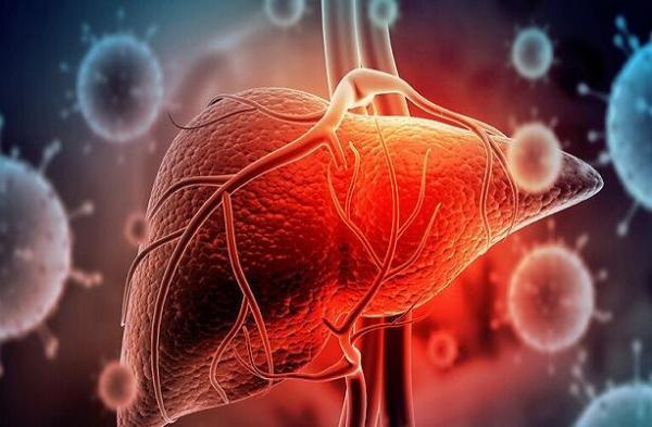 فراوری شبه بافت کبدی از سلول های بنیادی پرتوان انسانی