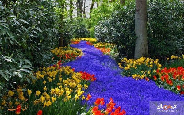 باغ گل کوکنهوف کجاست و چرا سفر به آن توصیه می گردد؟، تصاویر